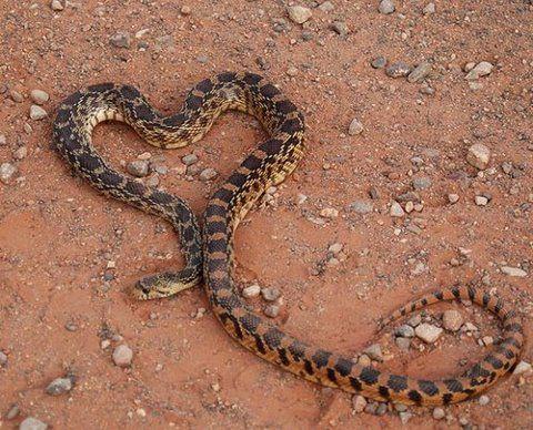 Snake Love - YouTube